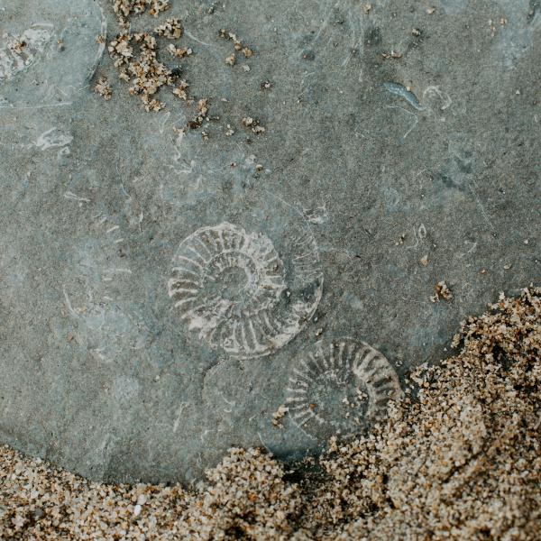 "Eileen G'Sell reviews drama film ""Ammonite"" in Hyperallergic"