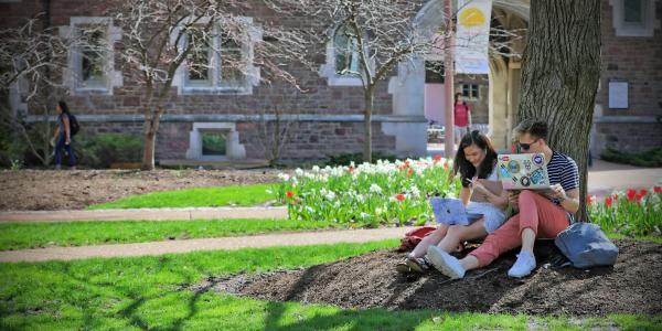 students sitting under tree with laptops