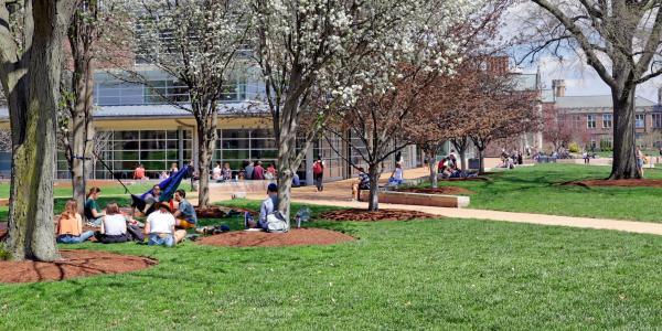 people sitting under trees